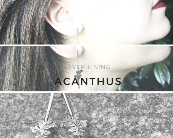 Acanthus copia 15