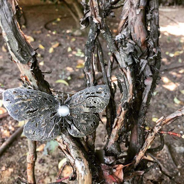 papillon corteccia